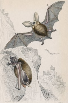 A bat's wing bones are homologous to human hand bones.
