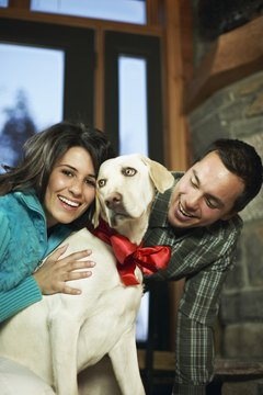"Labradors are often portrayed as the almost ""perfect"" family dogs."