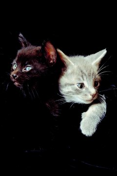 Companionship is a must for many kittens.