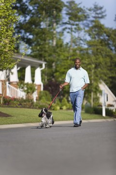 Regular exercise is an important part of the transition from outdoor to indoor pet.