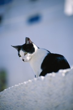 Cats enjoy observing the world from high places.