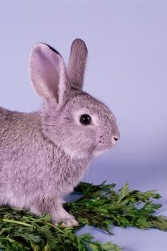 What Does It Mean When A Rabbit Thumps His Hind Legs Animals Mom Me
