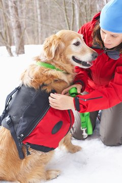 Backpack vests are great for outdoor dog lovers.