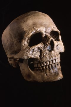 Forensic anthropologists apply the science of biological anthropology to medicolegal investigations.
