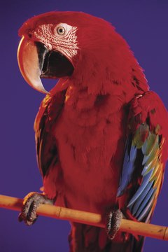 Inability to find a perch is one sign of respiratory distress in parrots.