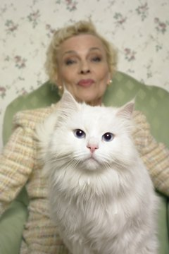 Most blue-eyed white cats are deaf.
