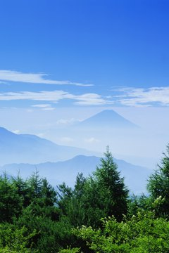 Evergreens in front of Mt. Fuji