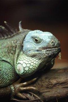 DIY: Reptile Misting | Animals - mom me
