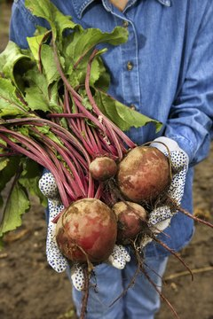 Turnips are a fairly good source of complex carbohydrates.
