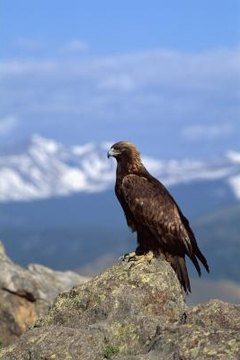 Differences in Hawks and Falcons | Animals - mom me
