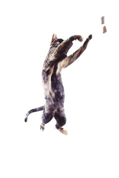 Your cat might leap tall buildings after a whiff of catnip.