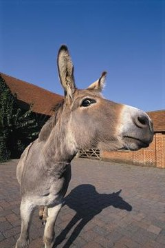 Donkeys & Mules for Pets | Animals - mom me