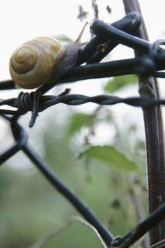 Poisonous Snails | Animals - mom me