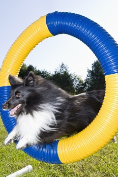 Dog exercise equipment doesn't have to be high tech.