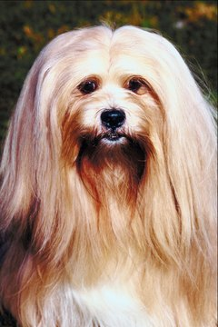 Clippers make your job easier and allow you to maintain the flowing shape of your pup's hair.