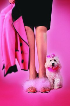 Your dog is live animal not a fashion accessory, she needs to be taught to behave.