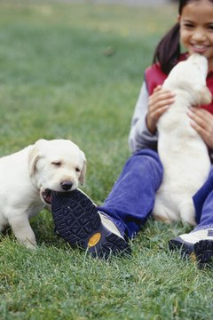 Don't encourage your pup to chew on your shoes or tug on your hem. It will confuse him.
