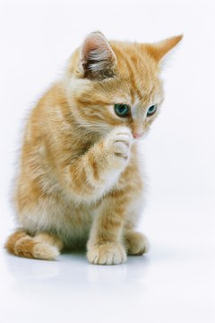 A cortisone injection can spell relief for your kitty.