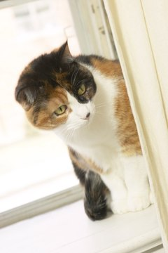 Your cat may yowl when seeing a strange cat through the window.