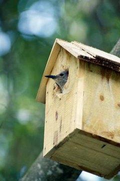 Prime Woodpecker Birdhouse Construction Animals Mom Me Home Interior And Landscaping Ferensignezvosmurscom