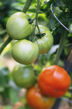 Practice crop rotation every season to prevent a pest buildup in the garden.