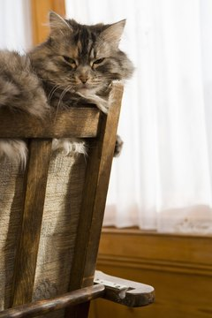 Some cats are sensitive to common allergens in the home.