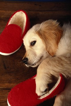 Like your slippers, a pair of slip-resistant socks gives him traction and keep his paws warm.