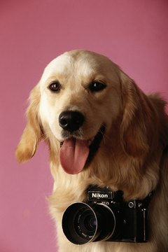 Collar cameras give you a dog's eye view on the world.