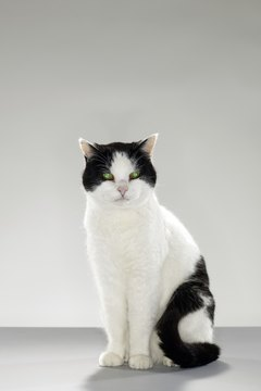 It's not unusual for hyperthyroid cats to have CKD.