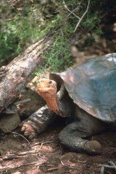 Tortoise Mating Habits | Animals - mom me