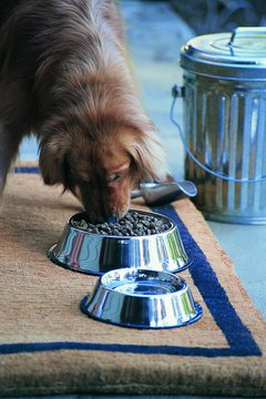 A bowl with a flared, flat bottom will put the kibosh on your pup's spilling habits.