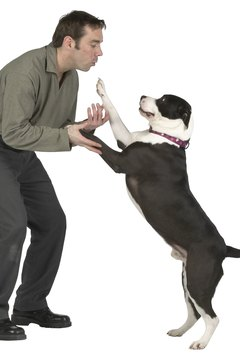 Your dog is probably expressing dominance when he pushes you.