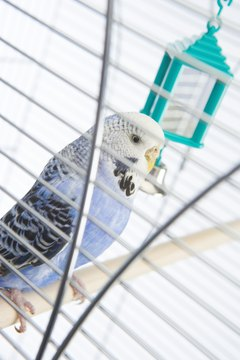 Birdie enjoying his time in the cage a bit too much?