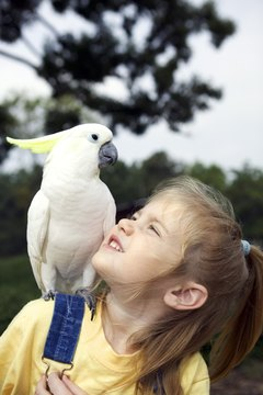 A well-treated cockatoo makes a cuddly friend for life.