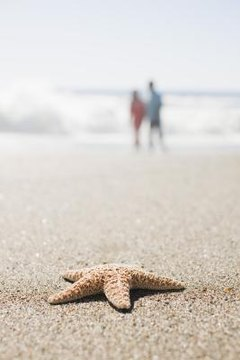 What Causes Starfish to Be Washed Ashore   33b7746cb29