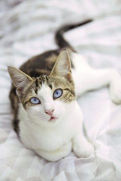 Playing with your cat for 15 minutes a day can keep her happy and active.