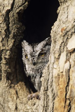 Owls hold great significance in Cherokee spirituality.