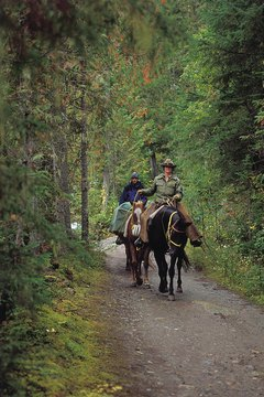 People riding horses on trail through forest