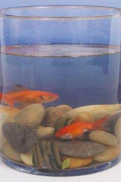 types of parasites on freshwater fish animals mom me