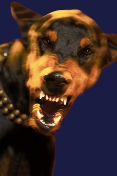 Aggression among male dogs is common when they share a home.