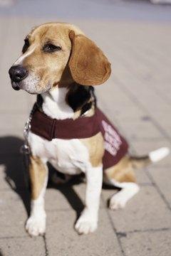 Dog in quarantine (focus on face)