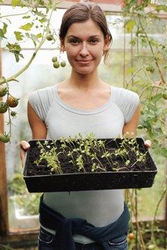 Compost tea is a natural fertilizer.