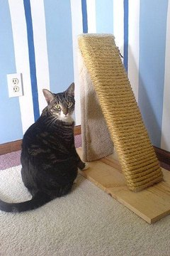Diy Cat Scratch Post Animals Mom Me