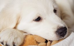 Inaugurar una tienda de productos para mascotas implica mucho trabajo.