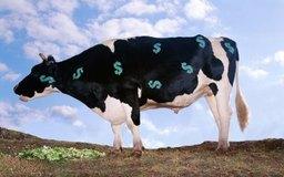 Algunos elementos de la cartera pueden ser clasificados como vacas lecheras.