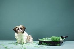 The Best Washable Dog Beds