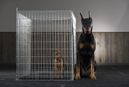 How to Set Up Your New Dog Kennel