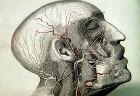 Vitamin B12 & the Nerves