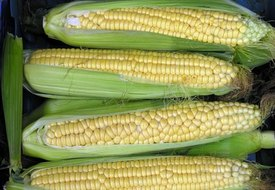 Nutritional Value of Boiled Corn