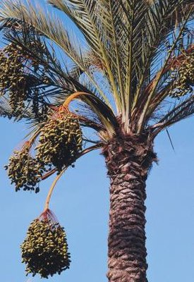 Is Palm Fruit Oil Good for You?
